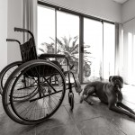 Dog at Nursing Home with Wheelchair