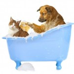 Cat Getting a Bath with Dog