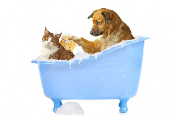 What Can You Use To Give A Dog A Bath