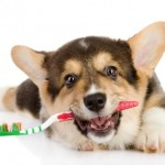 Home Dental Pet Care